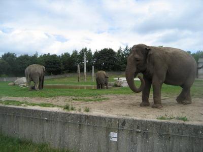 billund zoo pleje Danmark