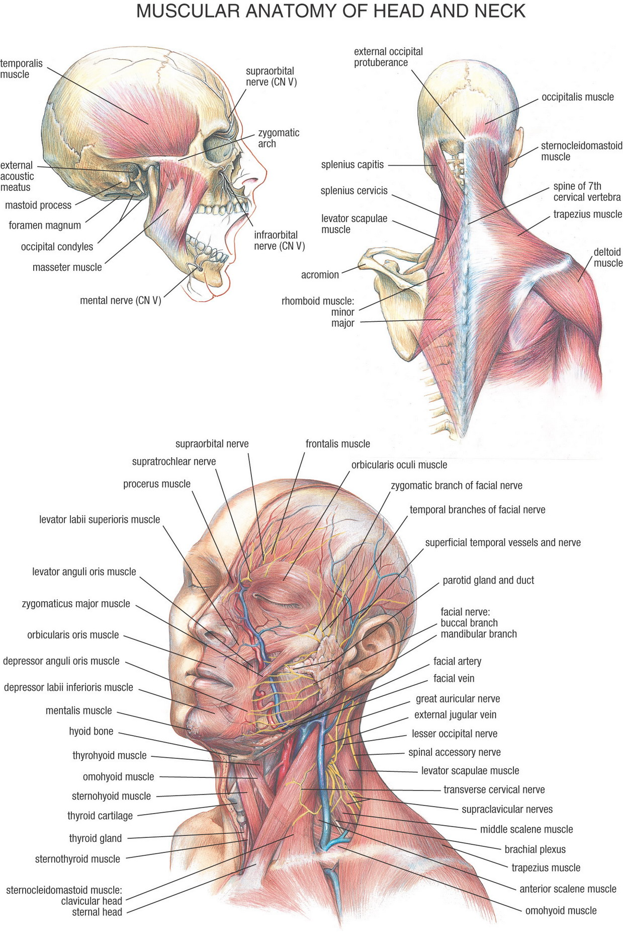 Images of anatomy
